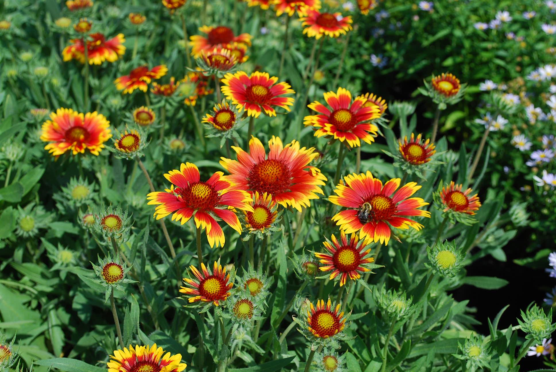 Gardens Garden plants and Spreads on Pinterest