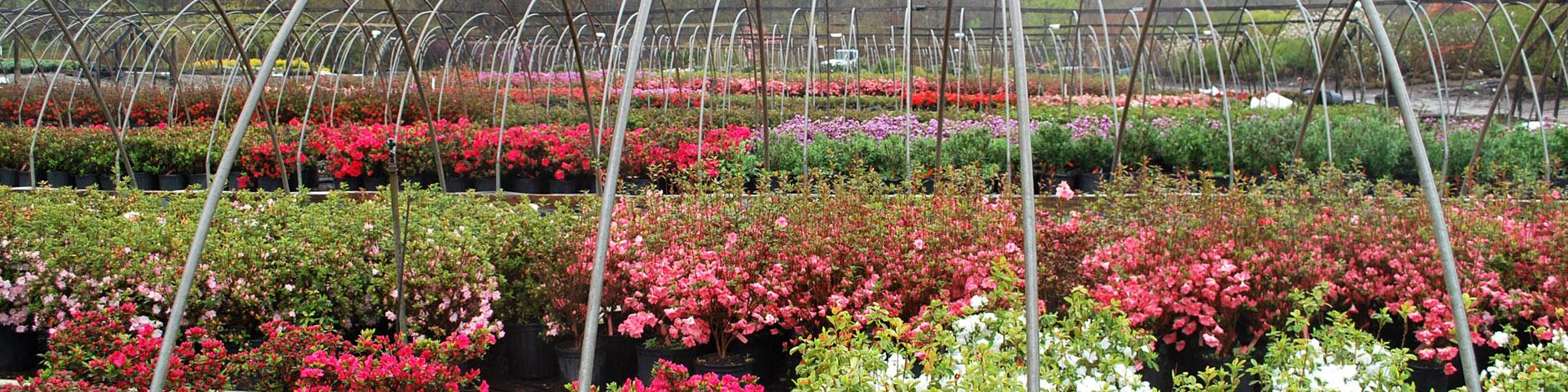 Planters\' Choice | Connecticut\'s Wholesale Nursery