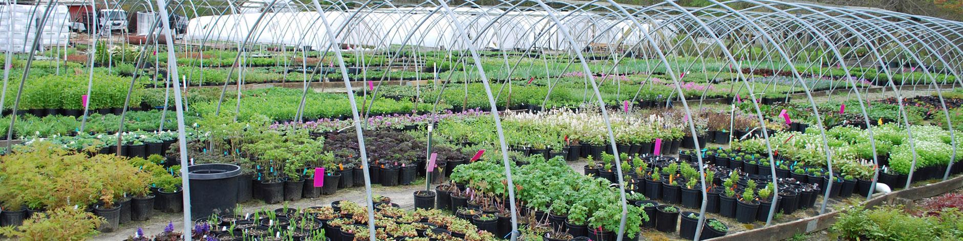 Plantersu0027 Choice | Connecticutu0027s Wholesale Nursery