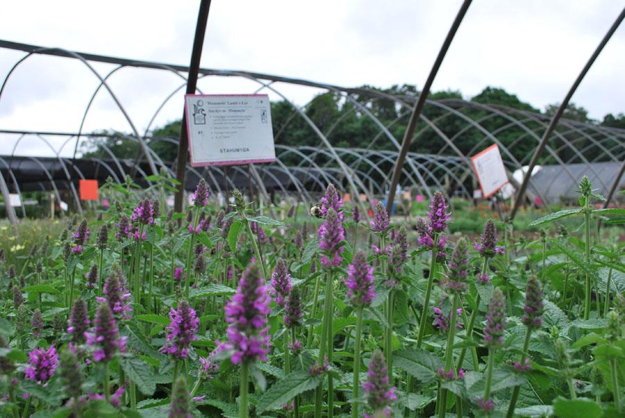 Planters' Choice | Connecticut's Wholesale Nursery